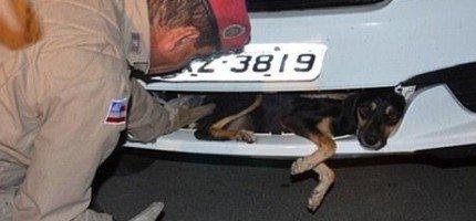 他撞到了一隻狗後還繼續開了2小時。當他終於停下來後,這是他看到的。