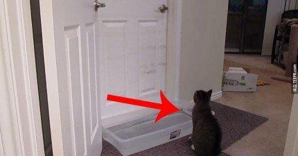 沒有人相信他的貓可以開門,因此他拍了這支影片證明。