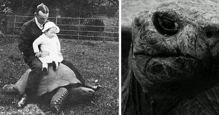 這是這隻「182歲烏龜」112年前和現在的對比照片。