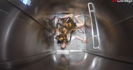 狗狗打扮成巨大蜘蛛,結果...居然比人類的惡作劇還要可怕!