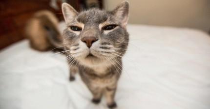 如果你整人整膩了,那就去整貓咪吧!他們的反應絕對比人類的還要更令人滿意!