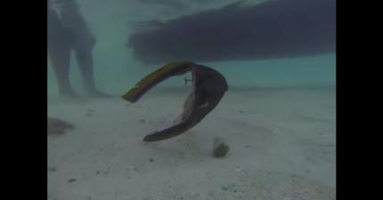 他在浮潛的時候拍到了一條只有頭的魚...因為身體已經切掉了...!