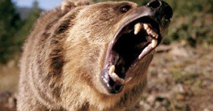警方在森林中找不到遭母熊攻擊的婦人,直到在隆起的土堆中發現一隻手...