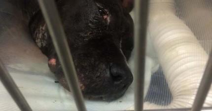 看著這隻狗狗的小尾巴開心地甩著,你不會相信他經歷過多悲慘的狗生。