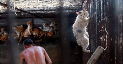 這隻小貓差點在中國狗肉節被生吞活剝,所幸被救援出來讓他有現在的超萌模樣!
