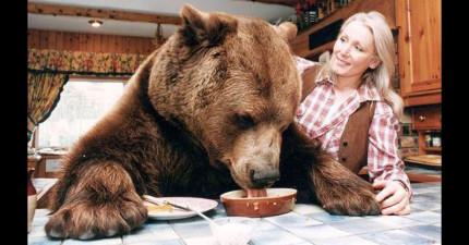 專家都警告說這隻比人高的190kg大棕熊遲早會把他們撕碎,但看到他們的快樂家庭照真的讓人好羨慕!