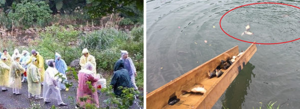 宗教團體一邊唸「阿彌陀佛」一邊把1萬斤鯉魚放生還很開心,但當大家一看到河裡的殘忍畫面都當場氣哭了…