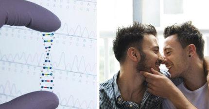 別再說被「掰彎」了!研究已找到證據:GAY是天生的!