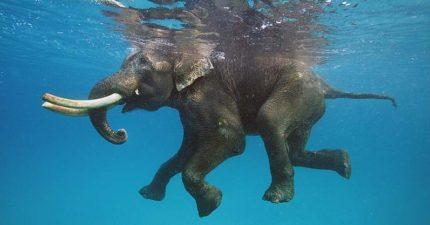 12張動物「正在潛水的美照」,只是看到「鯨魚在船底的部分」還是打了個冷顫啊!