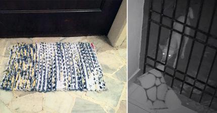 家裡地墊狂被偷 裝監視器抓到「缺乏溫暖毛小孩」屋主:繼續給牠偷吧