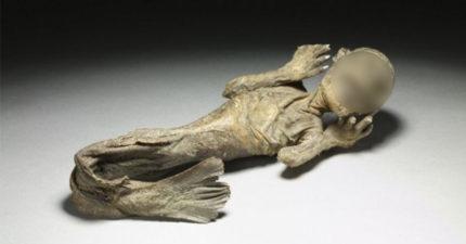 8個真實存在神話生物標本! 水底情深異形「精靈魚」