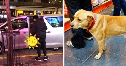 小黃狗從14樓摔進1樓汽車天窗 主人一看:有人想殺他