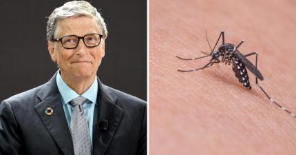 蚊子要滅絕啦!比爾蓋茲砸1.2億「讓蚊子繁殖到絕種」
