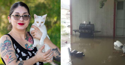 高冷貓咪被大水一淹 目睹主人「槌地板」救命...重生後變小黏獸啦~