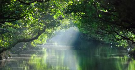 台灣不只台北!韓旅遊業者新推必訪景點「台南亞馬遜河」