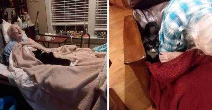 知道奶奶快要離開人間 貓咪開始「每天叼禮物」膩在身邊:看她的眼就知道