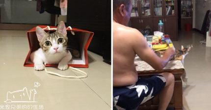 老爸嗆「養貓就搬出去」 如今看電視卻乖乖伺候梳毛到手軟...