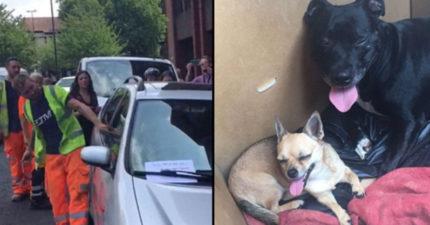 影/30度高溫車內烘狗狗 工人看不下去「砸窗延續生命」:這是愛?