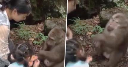 影/餵食一半突然收手 野猴瞬間暴怒「左勾拳揍小女孩」:你當老子吃素?