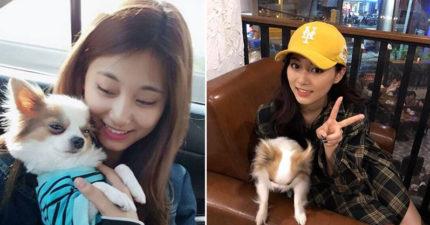 子瑜好可愛!她家狗更可愛!曬愛犬照「網友瞬間矛盾」:要帶誰回家呢?