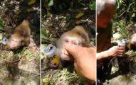 影/獼猴眼睛半開沒呼吸 2爛男「木棍幫撐下巴」乾杯大笑:喝酒到流鼻血喔?幫你擦啦