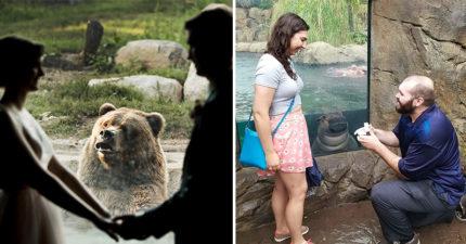 你們在幹嘛?動物見「人類相愛」反應超奇特 貓咪不屑白鯨開心祝福~