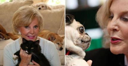 動物通靈師分享:貓的靈魂很自我、蛇超有趣 甚至連「上天堂的聲音」她都聽的到!