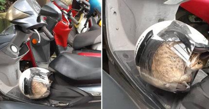 正準備牽車...驚見安全帽被偷用! 「虎斑色毛怪」完全不想動:你自己走回家吧