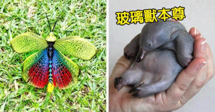 24個「連哈佛教授都不知道」的驚奇冷知識 蝗蟲的翅膀裡面竟然有一道彩虹!