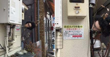 日本「最強防盜法」比監視器有用 水管旁的人頭「頭頂樹葉盯著你」...整條脊椎涼掉!
