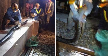 台鐵維修員深夜發現「輪下怪怪的」 下車被「斷2截的超長物」嚇壞:我再也不想遇到!