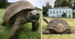 世界最長壽的烏龜活過「人類投胎又一次的人生」 最好朋友跟牠差97歲!