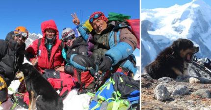 他挑戰雪山「被丟下的登山客」忽然鑽進帳棚 一起成功「登峰後的結局」更感人!