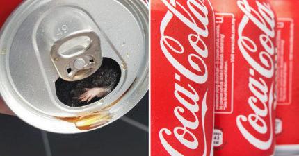 餓男買披薩配可樂喝到「一隻小手手」 仔細一看發現「超新鮮配料」崩潰了...