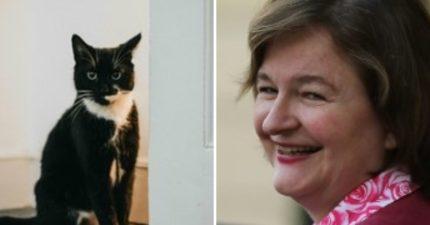 法國部長幫愛貓取名「脫歐」 網友讀出「對英國的調侃」笑翻:超酸!