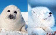 15張人類再破壞地球就看不到的「超萌極地溫暖照」  小北極熊玩捉迷藏的位置超大膽!