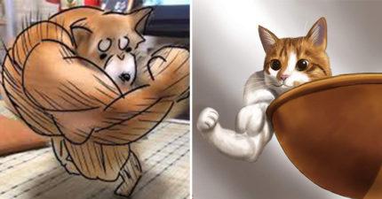 日瘋傳「右勾拳柴柴PK肌肉狐狸」爆笑照 貓皇也來湊熱鬧...變身筋肉貓!
