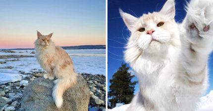 天堂等級的「仙氣貓咪巨獸」爆紅吸20萬粉絲 牠伸出貓掌竟跟「奴才的手一樣大」!