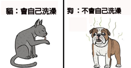 4個證明「貓咪比狗狗更優秀」對比漫畫 網看到「最後亮點」笑翻:難怪~