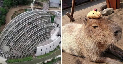 木柵動物園「熱帶雨林室內館」正式開幕!超萌「水豚集體泡澡」引暴動:暑假約一波❤