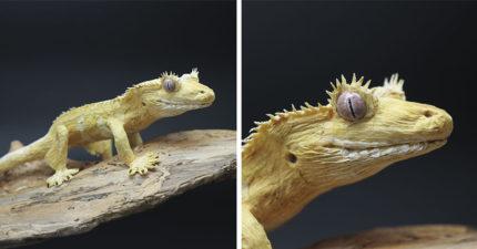 藝術家「用皺紋紙」神還原自然界生物 網近看「超夢幻細節」嚇瘋:牠在看我