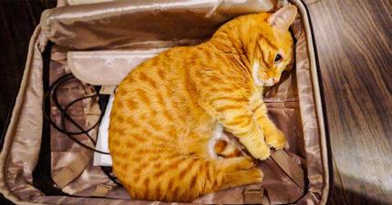 19張「讓你想一把抱進懷裡」的超委屈寵物照 小白狗「躲在行李箱」探頭討拍❤