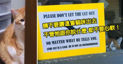 家貓「太愛逃家」主人崩潰 暴怒立牌「警告路人」網被萌翻:撒嬌功力太强!