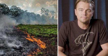 大火延燒破紀錄…李奧納多「捐款1.6億」拯救亞馬遜 憤怒質問:為什麼沒有媒體報導?