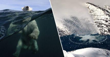 地球怎麽了?格陵蘭島24小時「超過120億噸冰」融化 專家心痛:數千年來最快的一次
