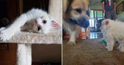 小隻貓第一次看到汪星人!牠一秒「露出本性」表情超反差 網爆笑:果然是宿命