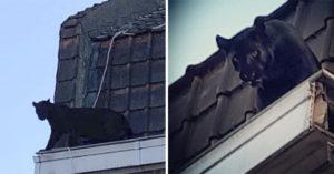 屋頂驚現「黑豹逛大街」情況超緊張!牠跳進屋内和少女「四目交接」網:快喊瓦干達