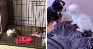 順手拯救「被烏鴉欺負」的3隻小貓 回家竟「馬上報恩」超幸運