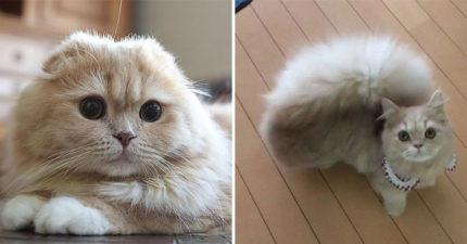 超萌小貓因「毛茸茸大尾巴」爆紅 外型一秒「Cosplay松鼠」融化15萬粉絲!
