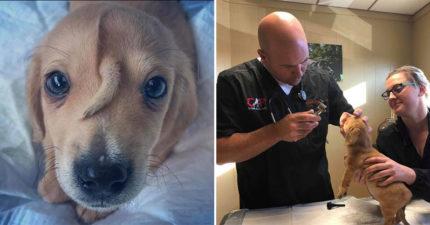 擁有「獨角獸基因」的狗狗!10周大幼犬被遺棄路邊 救援團隊看到「頭上特徵」秒融化❤